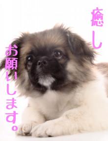 アロマとクレイでハッピーライフ ナチュラルセラピストkyokoのブログ@大阪-ドッグアロマ1